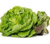 Slonova lettuce